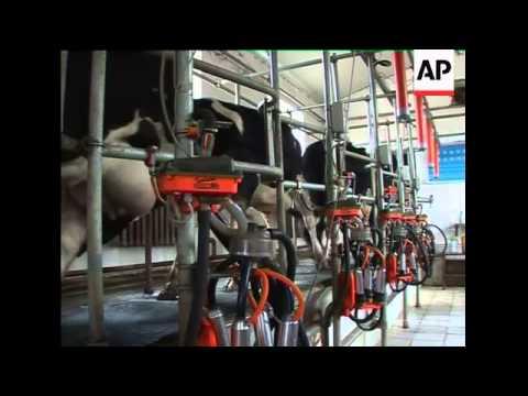 China - Milk Scandal