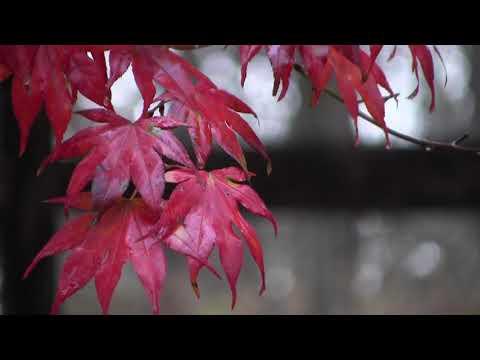 Rainy Autumn Day, Howard County Maryland