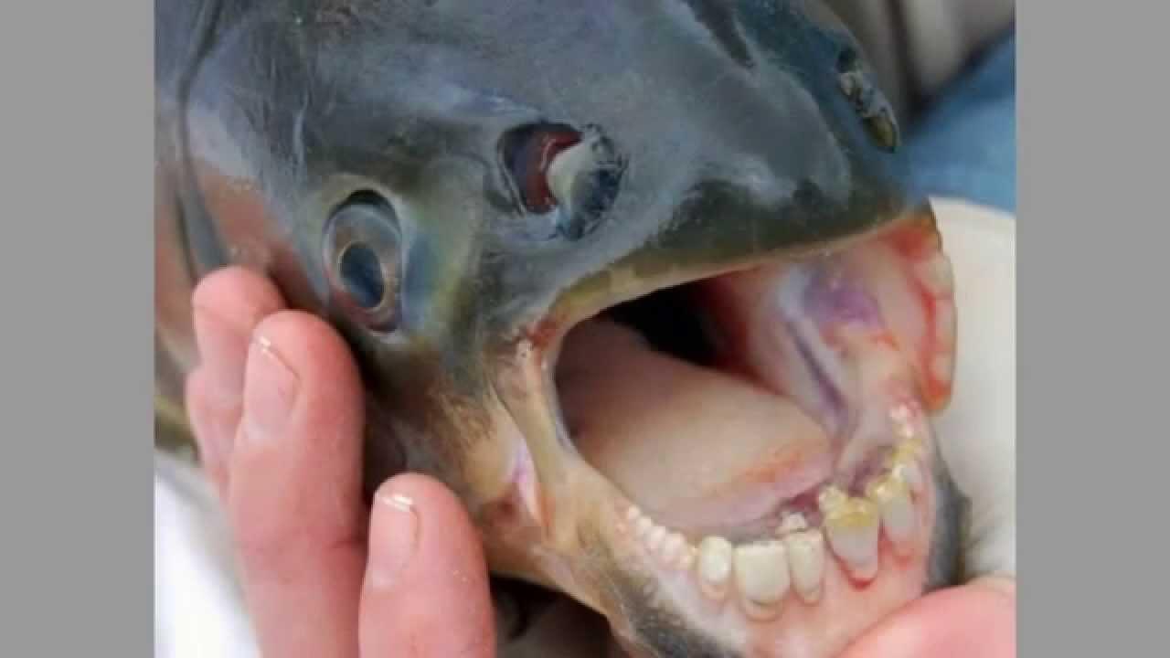 Fisch Mit Gesicht
