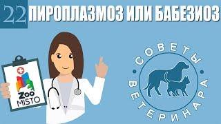 Пироплазмоз или бабезиоз у домашних животных | Что такое болезнь пироплазмоз | Советы Ветеринара