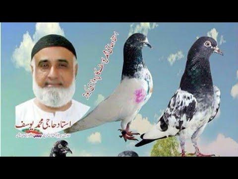 Ustad Haji Yousof Sab High Flyer Pigeons