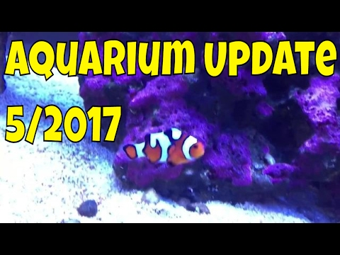 saltwater aquarium update - May 2017 - rotter tube