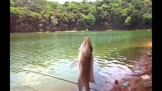 Pescaria na represa billings tilapia e cara