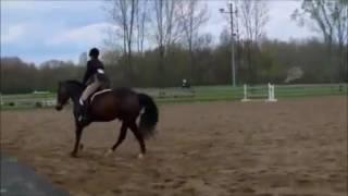 Various Horses Ridden
