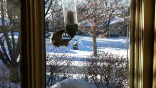 Squirrel Spinning On The Bird Feeder