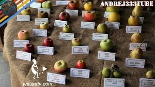 I meli autoctoni di Ernesto (Chianni 2014) (varietà di antiche cultivar di mele)