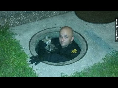 The Internet Freaks Out After Tampa Officers Rescue Kitten - Newsy