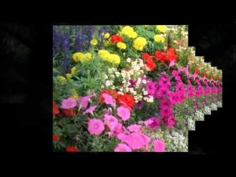Florist Calgary AB | (587) 333-7931