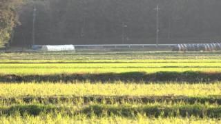 『猛禽屋』代表・ビッグ藤田さんによるハヤブサの実猟トレーニング。ハ...