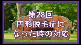 第28回 円形脱毛症になった時の対応 thumbnail