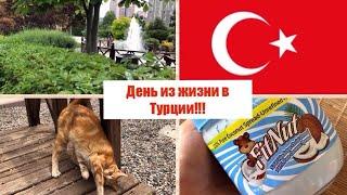 День в Турции/испортила футболку МУЖА турка/мой двор в Турции/животные в Турции/кокосовая ПП паста