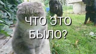 РОТВЕЙЛЕРЫ ВСТРЕТИЛИ НЕПОНЯТНОЕ НА ТРОПИНКЕ.Не дрессировка собак