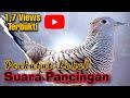 jam Perkutut Lokal Alam Manggung Gacor Khusus Untuk Pancingan  Mp3 - Mp4 Download