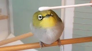 Pájaro Consentido