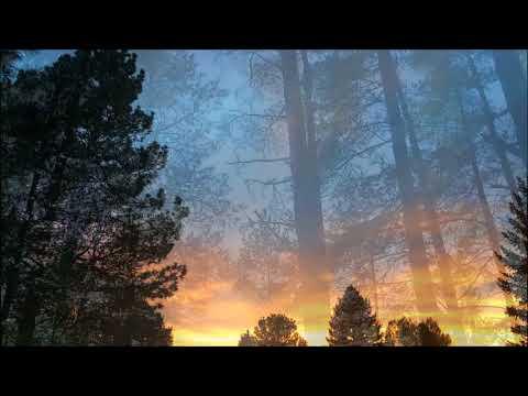 Johann Strauss Jr - Tales from the Vienna Woods, Op. 325