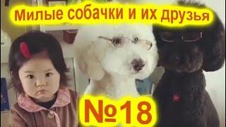 Приколы про собак 2021 Ну очень милые собаки Приколы с собаками Собаки Funny Dogs 2021