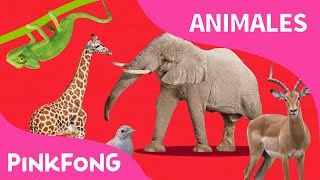 ABC Tren de Animales | Animales | PINKFONG Canciones Infantiles