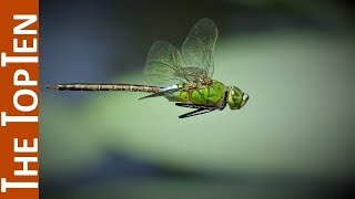The Top Ten Most Beautiful Dragonfly Species