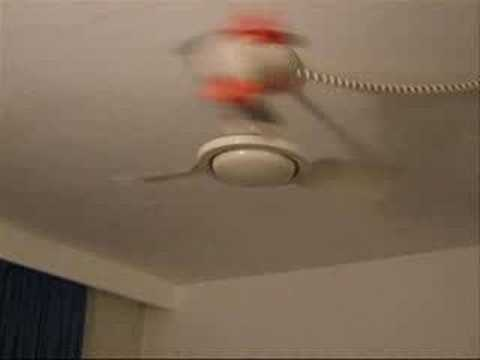 Dog Barking At Ceiling Fan