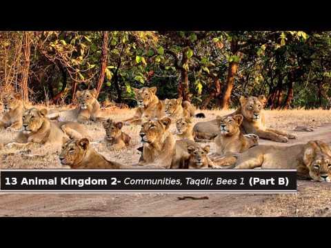 13 Quran & Science - Animal Kingdom 2: Communities, Taqdir. Bees 1 (Part B)