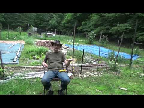How To Keep Ticks Out Of Your Yard Naturally