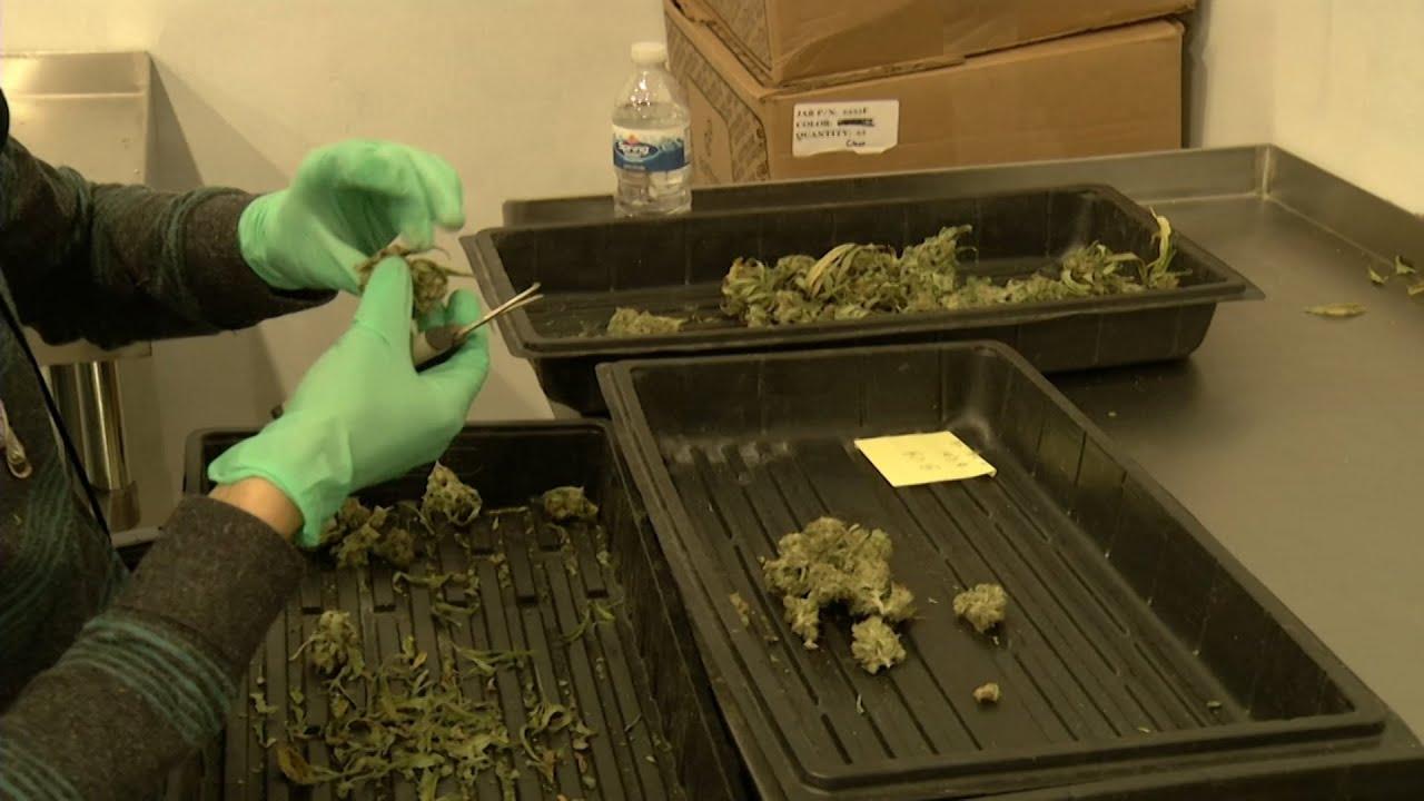 Cannabis Legalization Is Not a Pipe Dream, Says Sen. Scutari
