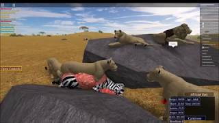 Wild Savannah (Roblox Gametype) - Hacker Encounter, Cannibalismo