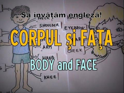 Părțile corpului în engleză