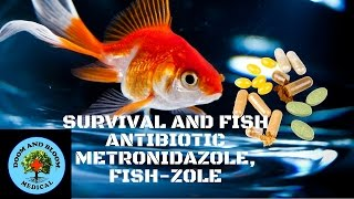 Antibiotic Metronidazole, Fish-Zole
