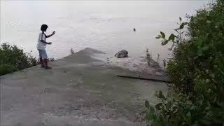 Buaya Timbul di Kuala Sungai Lingga, Sri Aman, Sarawak