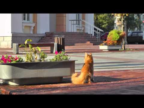 БРЯНСК . Город и люди