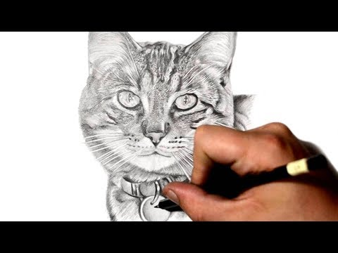 how-to-draw-a-cat