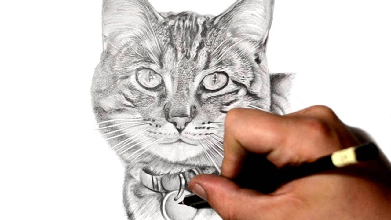 How to draw a cat pencil 37