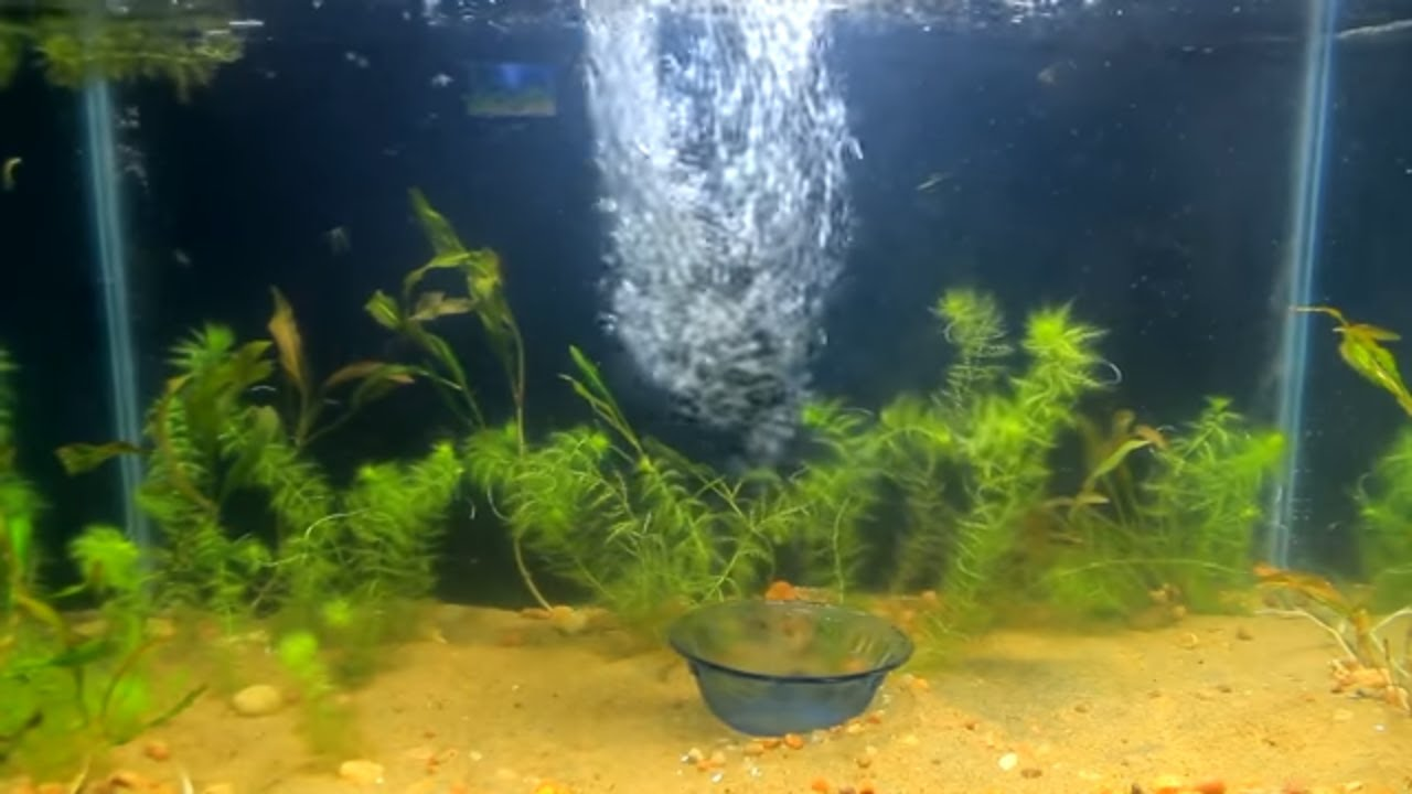 Aquarium i fish tank setup i koi fish i diy simple steps for Koi fish tank setup