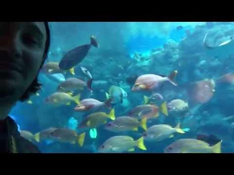 Aquarium of Pacific 034 tropical pacific reef 23 April 2015