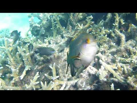 Pacific Jewel, Mystery Island  Drift Snorkel..