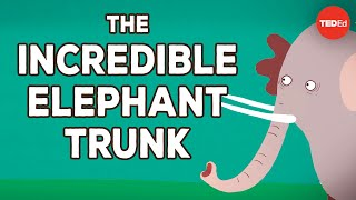 The incredible, bendable, twistable, expandable elephant trunk - Chase LaDue & Bruce A. Schulte