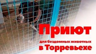 Испания. Приют для бездомных кошек и собак в Торревьехе