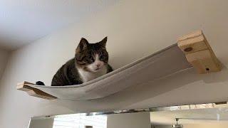 DIY Canvas Cat Hammock... Wall Platform, Cat Tree Shelf, etc...