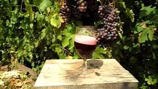 самодельное вино из крыжовника ч1
