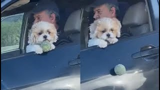 Dog Loses Ball While Driving