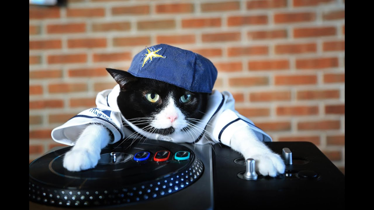What Music To Cats Like