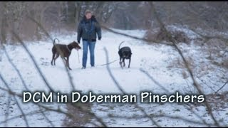 Dcm In Doberman Pinschers
