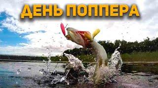 САМЫЕ ЗРЕЛИЩНЫЕ ПОКЛЕВКИ на поппер Ловля щуки и окуня на спиннинг эффективные проводки Река Тавда