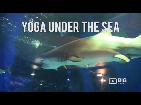 Yoga Under The Sea Sea Life Melbourne Aquarium Big Review TV