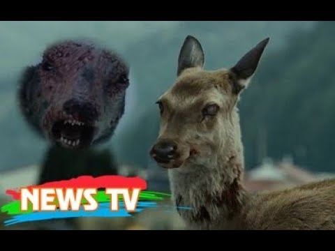 Đại dịch Zombie: Chuyên gia lo ngại bệnh biến hươu thành xác sống sẽ chuyển sang con người