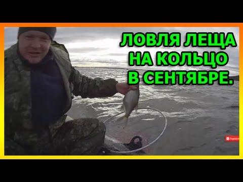 Ловля леща на кольцо в сентябре. Волга. Сызрань.