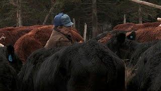Feeding The Cows | Alaska: The Last Frontier