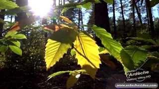 Ardèche - La beauté des sous-bois méridionaux en automne (4K)