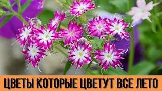 ДАЧА для ЛЕНИВЫХ Цветы которые будут радовать вас цветением ВСЁ ЛЕТО Цветоводам на заметку